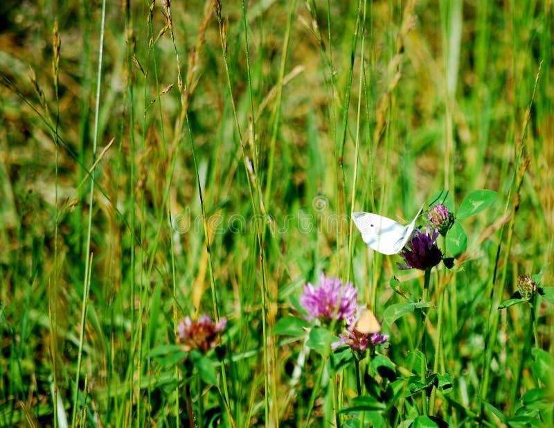 Papillon été perché sur une tige image libre de droits