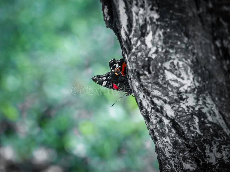 Papillon étonnant images libres de droits
