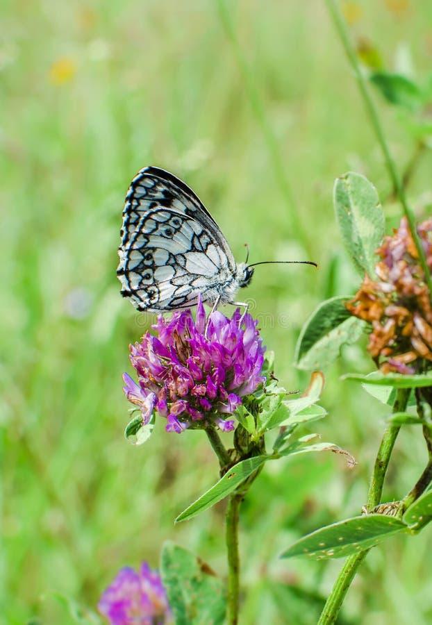 Papillon étonnant de nature images stock