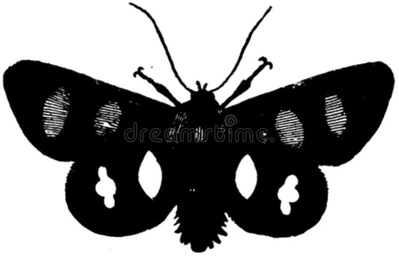 Papillon-002 Free Public Domain Cc0 Image
