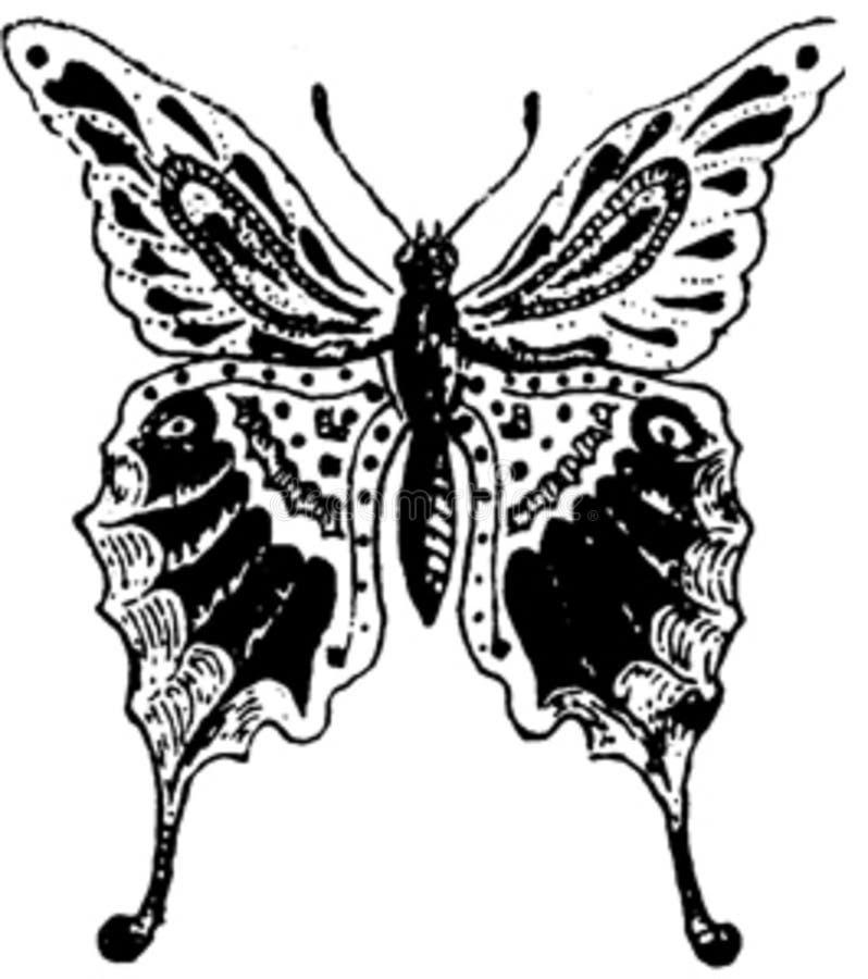 Papillon-004 Free Public Domain Cc0 Image