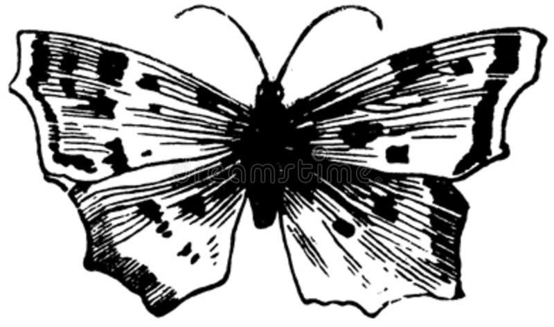 Papillon-005 Free Public Domain Cc0 Image