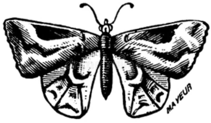 Papillon-006 Free Public Domain Cc0 Image