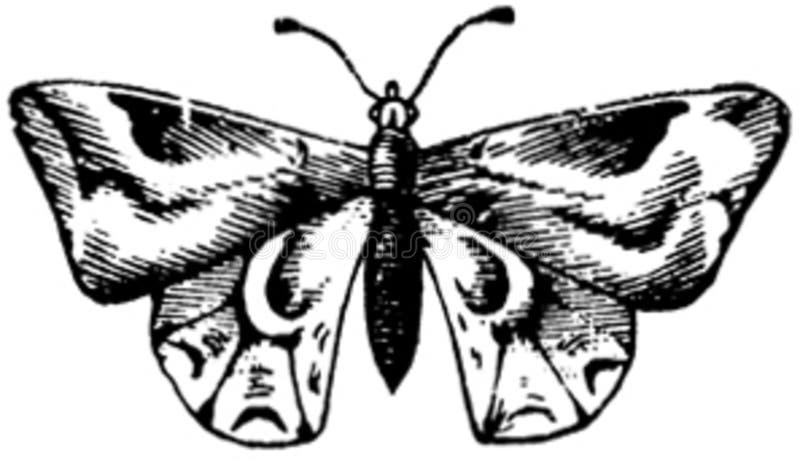 Papillon-010 Free Public Domain Cc0 Image