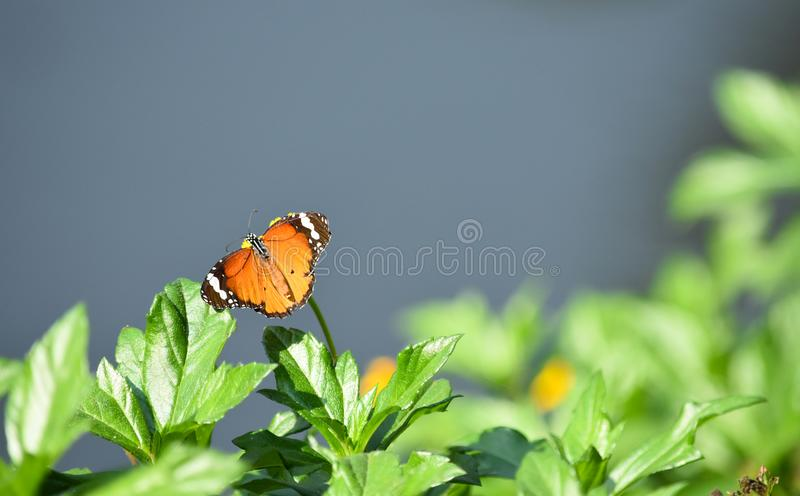 Papillon photographie stock