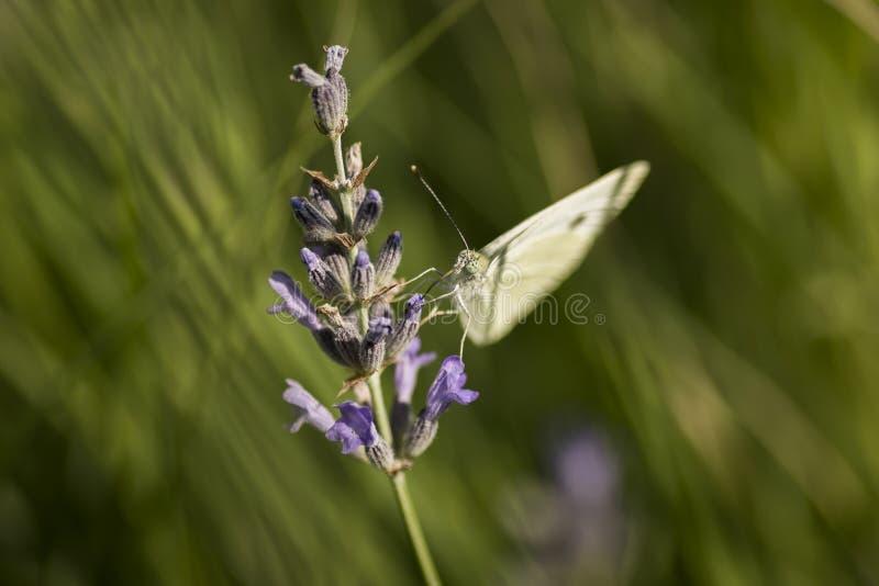 Download Papillon photo stock. Image du nature, centrale, normal - 56487186