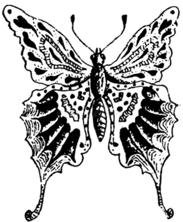 papillon-011 image libre de droits