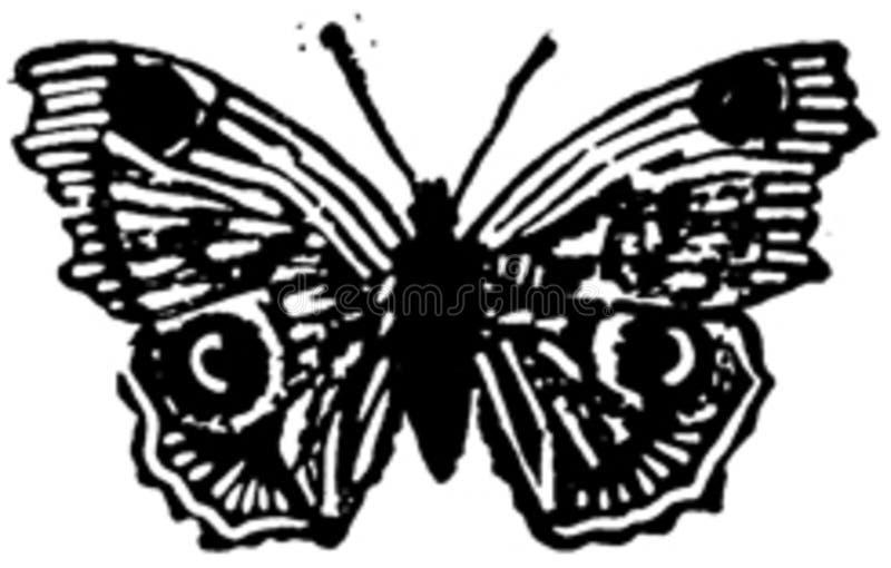 papillon-007 photographie stock libre de droits