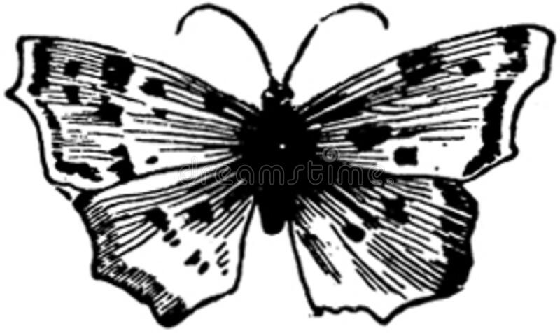 papillon-009 images stock