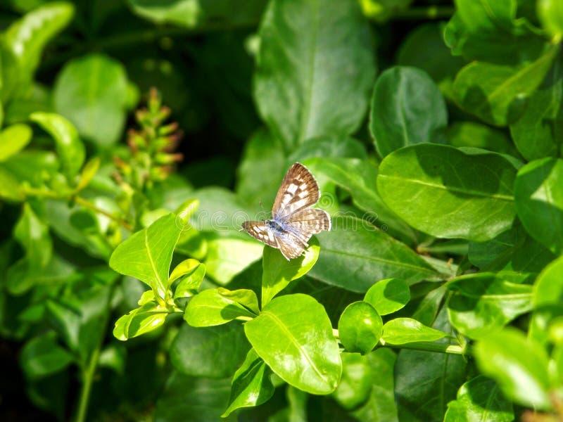 Papillon avec la fleur et le beau fond photographie stock