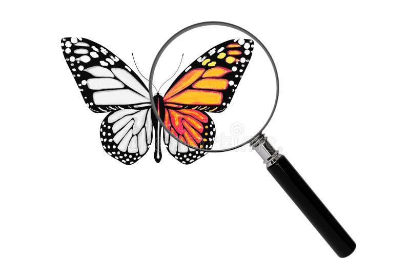 Papillon avec la loupe illustration de vecteur