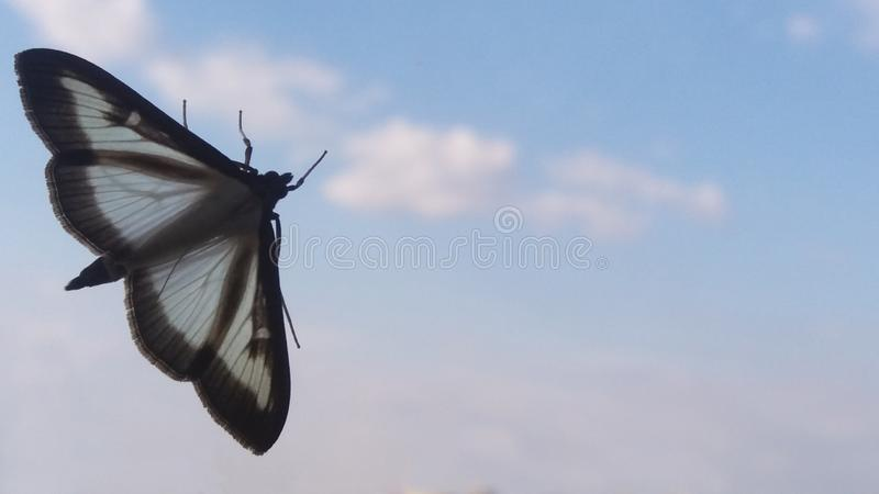 Papillon avec les ailes vides images stock