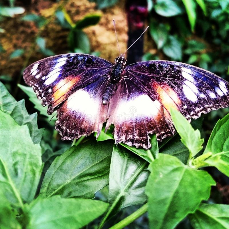 Papillon beau photos stock