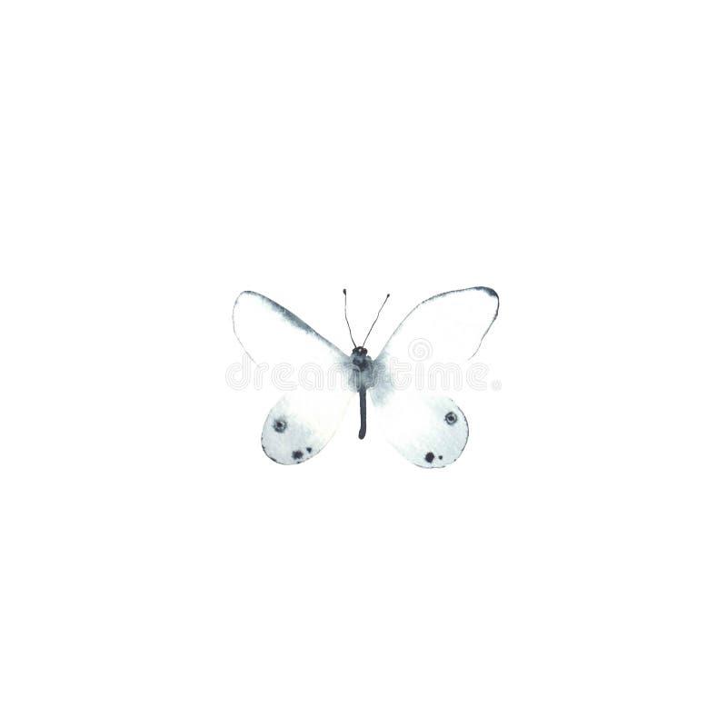 Papillon blanc d'aquarelle d'isolement sur le fond blanc image libre de droits
