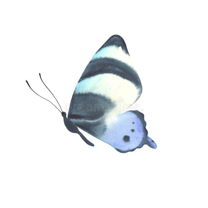 Papillon bleu d'aquarelle d'isolement sur le fond blanc photo libre de droits