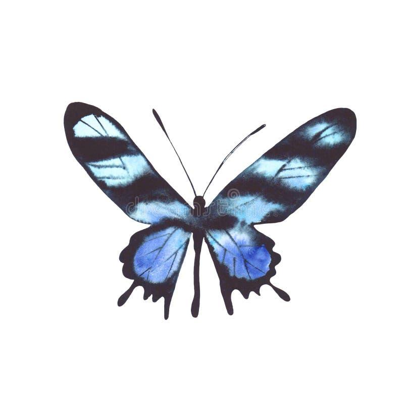 Papillon bleu d'aquarelle d'isolement sur le fond blanc image stock