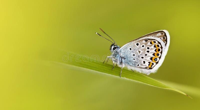 Papillon bleu - ressort, concept d'été photos libres de droits