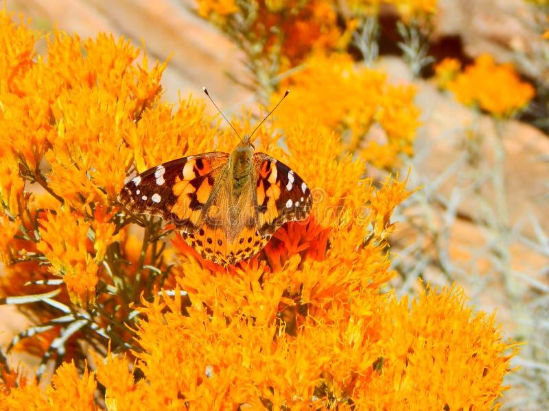 Papillon camouflé par orange mignonne dans Bush orange photographie stock