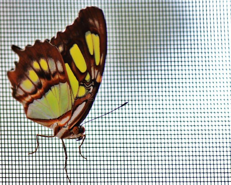 Papillon coloré en été dans le jardin photo stock