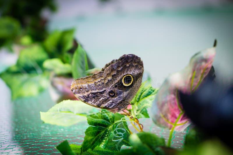 Papillon d'été sur une feuille verte images stock