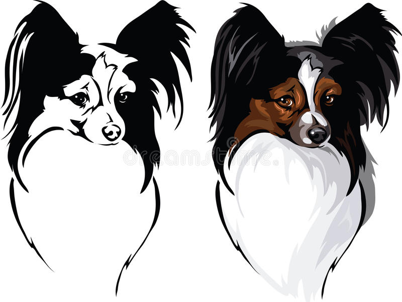 Papillon da raça do cão ilustração royalty free