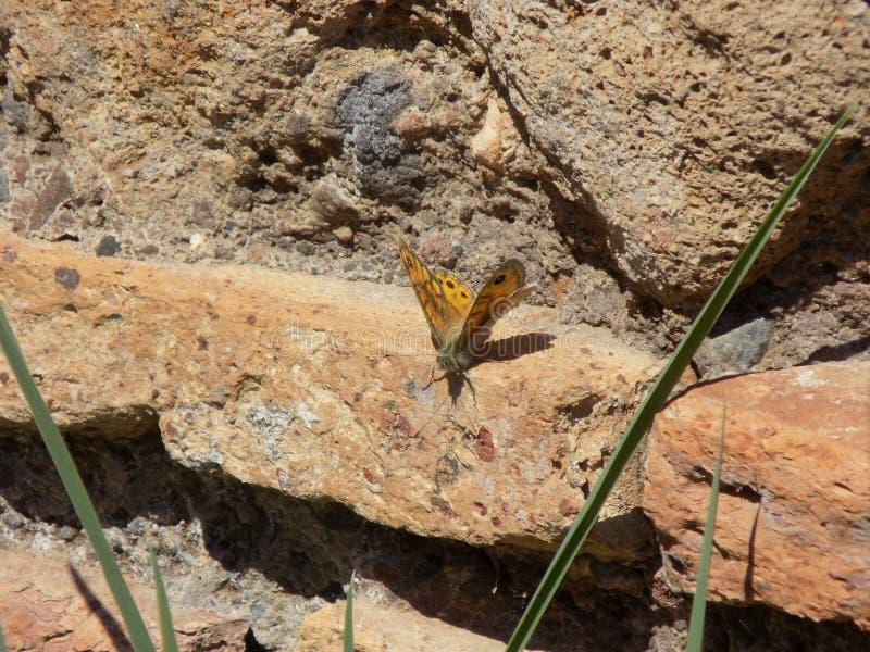Papillon dans de vieilles ruines photographie stock