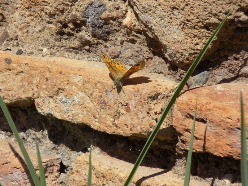 Papillon dans de vieilles ruines photo libre de droits