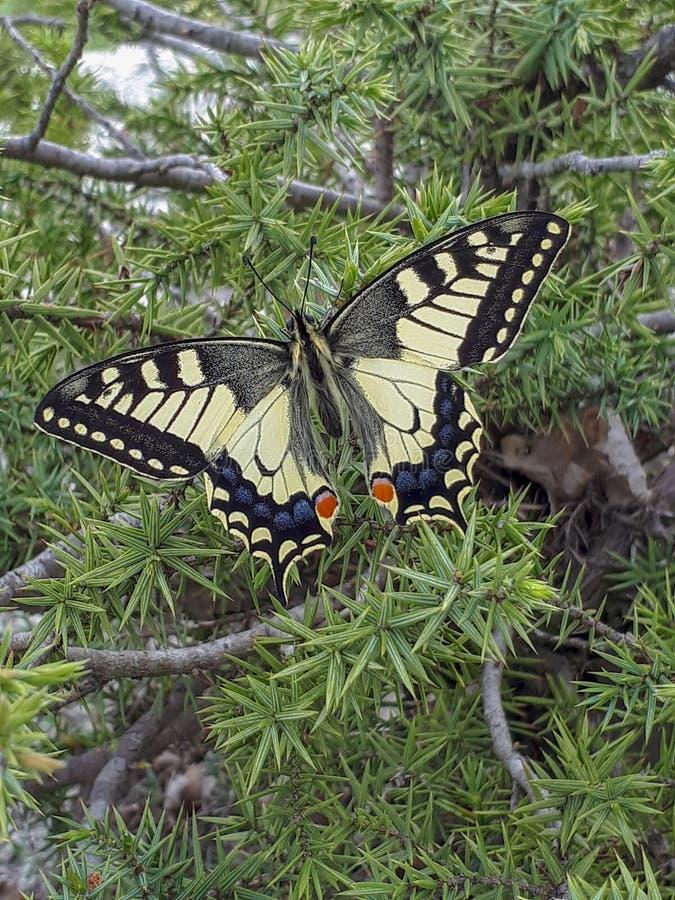 Papillon dans la for?t image libre de droits