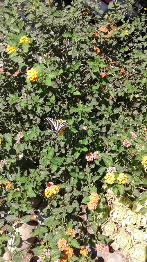 Papillon dans le buisson photo libre de droits