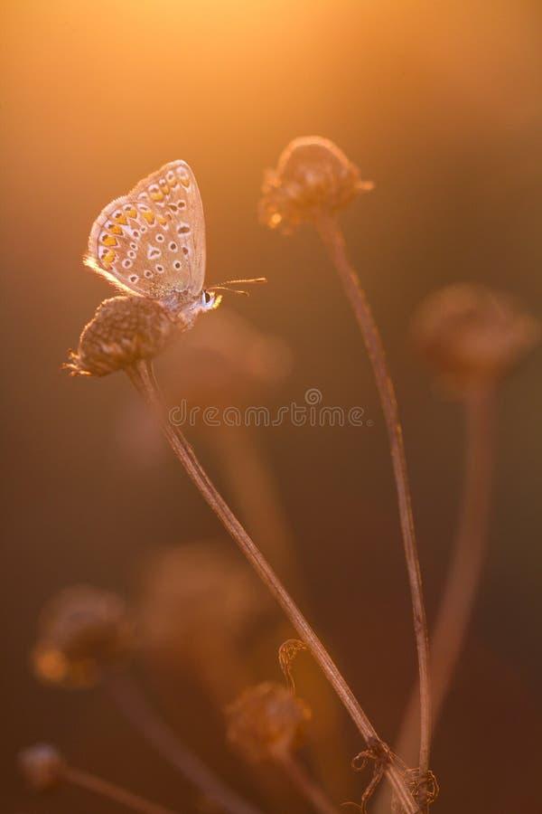 Papillon dans le contre-jour photos libres de droits