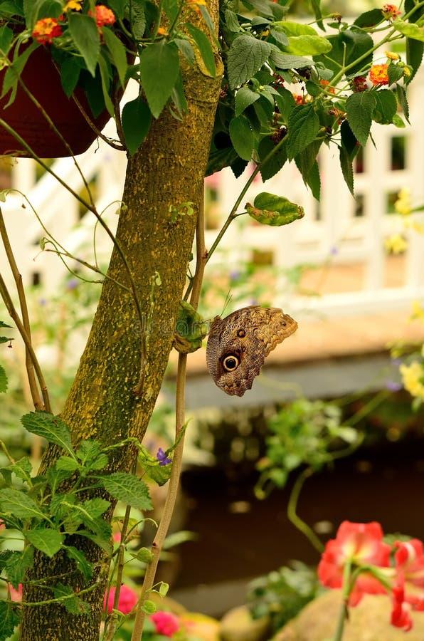 Papillon dans le jardin image stock