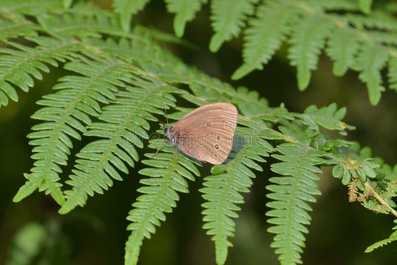 Download Papillon de boucle photo stock. Image du stationnement - 76082618