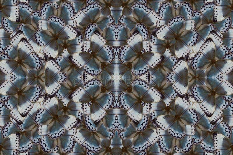 Papillon de Junglequeen de Cambodgien (howqua de Stichophthalma) illustration de vecteur