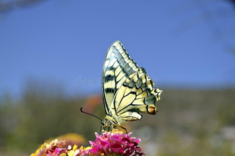 papillon de papier de cerf volant image stock image du. Black Bedroom Furniture Sets. Home Design Ideas