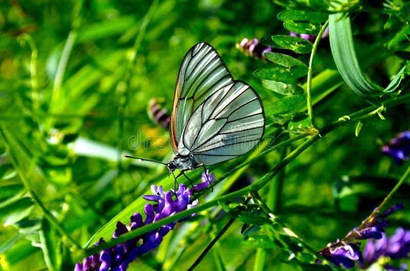Papillon de ressort image stock