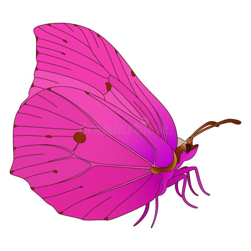 Papillon de vecteur. illustration libre de droits