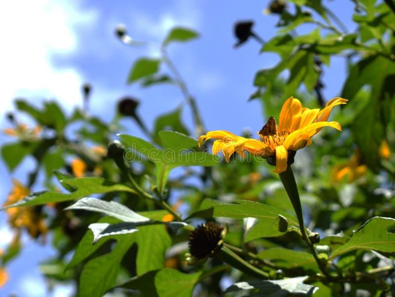 Papillon en fleur images libres de droits