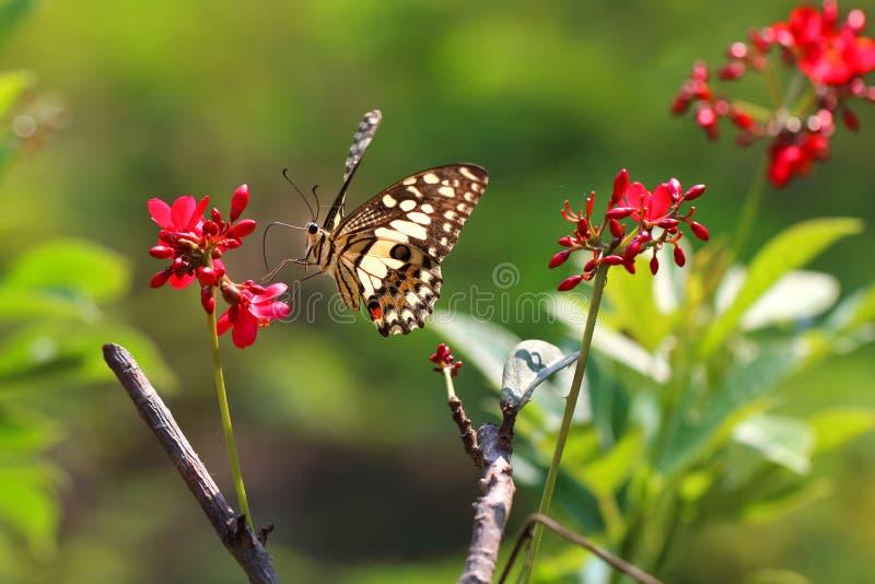 Papillon et fleur photos stock