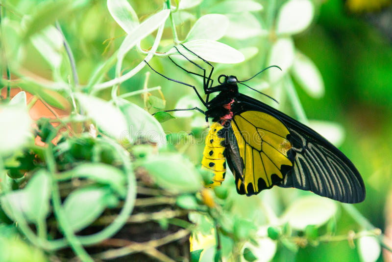 Papillon et fleurs rouges en parc de la Thaïlande image stock