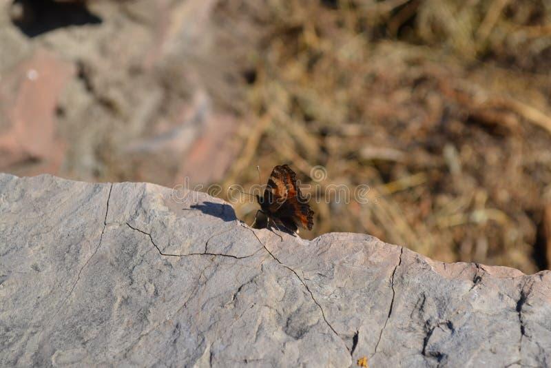 Papillon et pierre images libres de droits