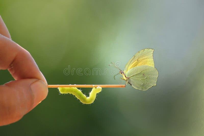 Papillon et ver photographie stock libre de droits