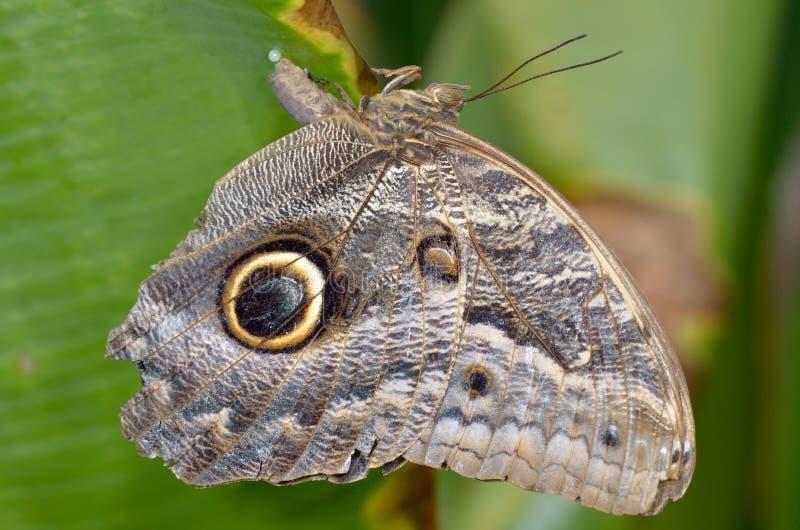 Papillon exotique dans l'habitat naturel photographie stock libre de droits