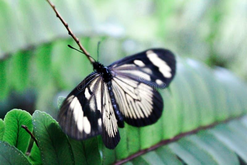 Papillon jaune et noir sur une feuille verte photographie stock