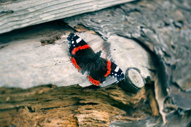 Papillon lumineux photographie stock