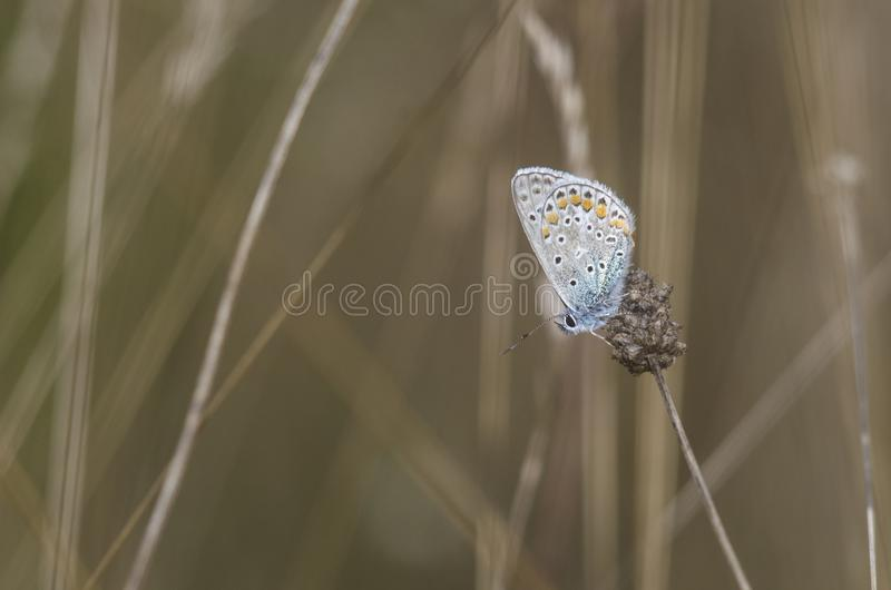 Papillon multicolore dans le domaine photos stock
