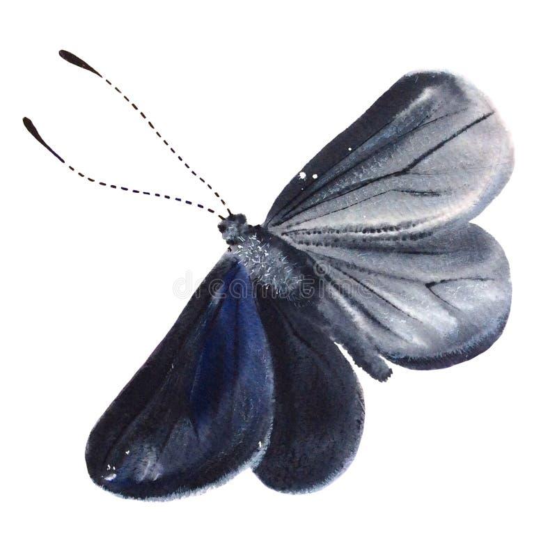 Papillon noir d'aquarelle d'isolement sur le fond blanc images stock