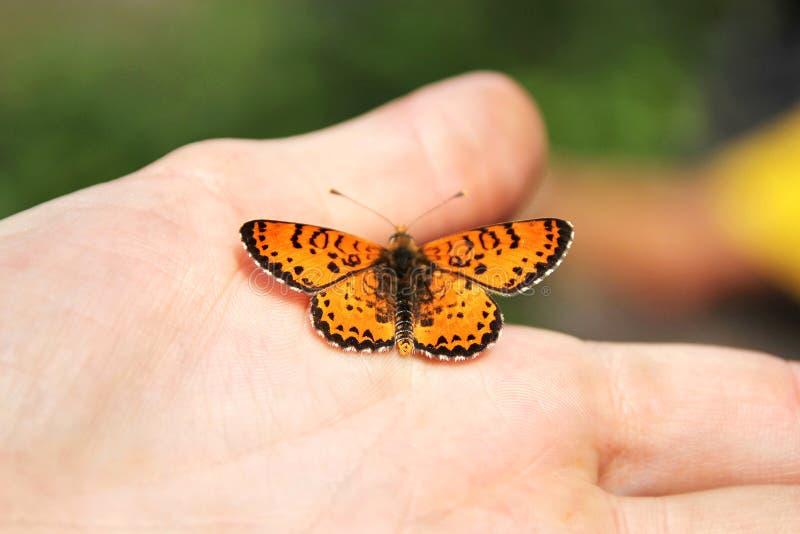 Papillon orange dans votre main photographie stock