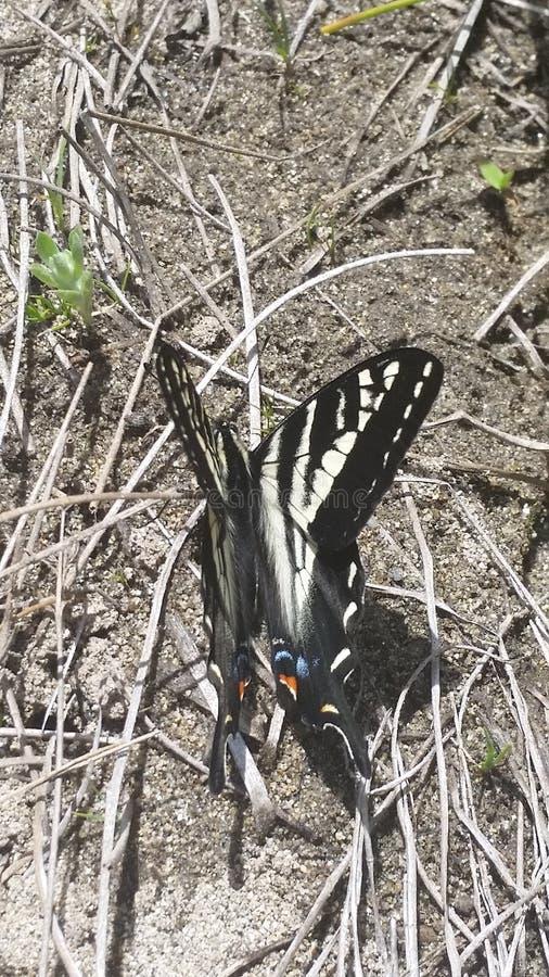 Papillon par la rivière photo libre de droits