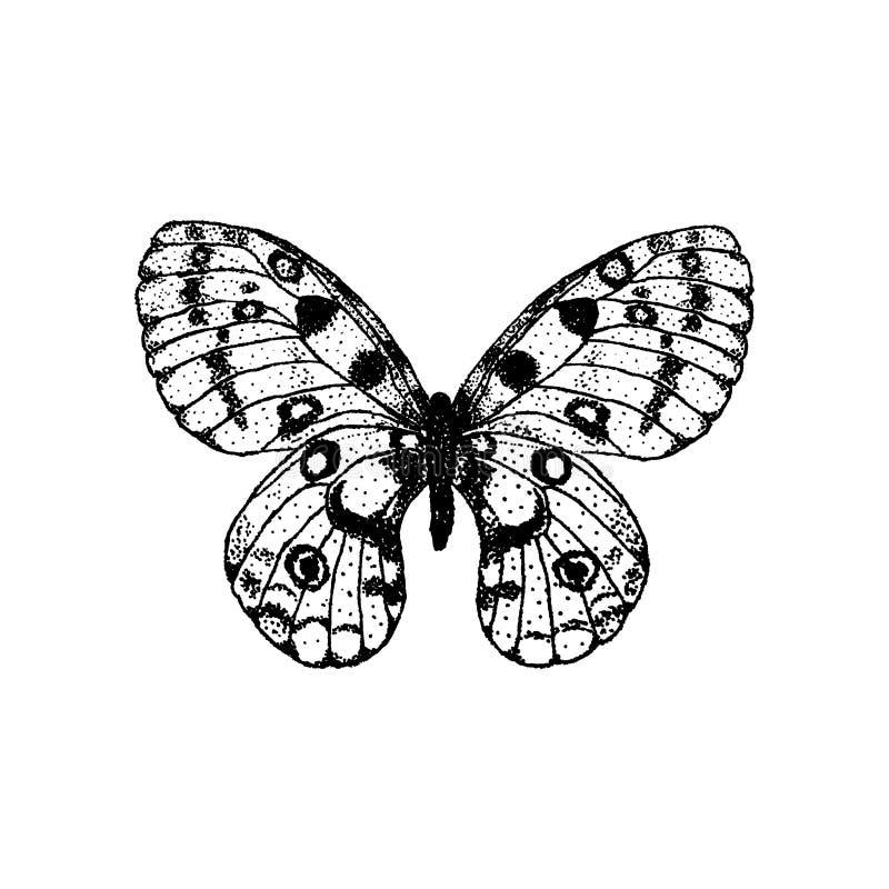 Papillon Parnassius Apollo de dessin de main d'illustration de vecteur illustration stock