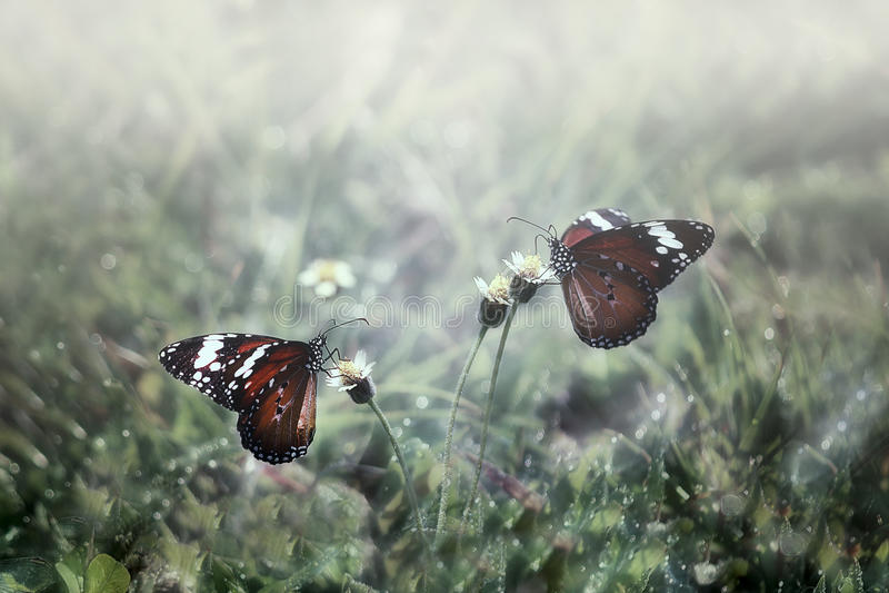 Papillon, pendant le matin photos libres de droits